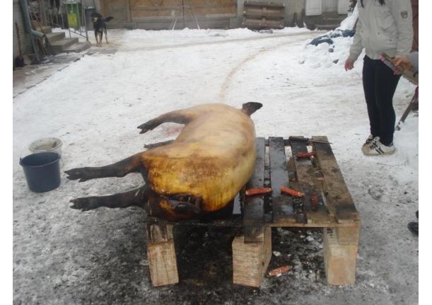 Tăiatul porcului decembrie 2010